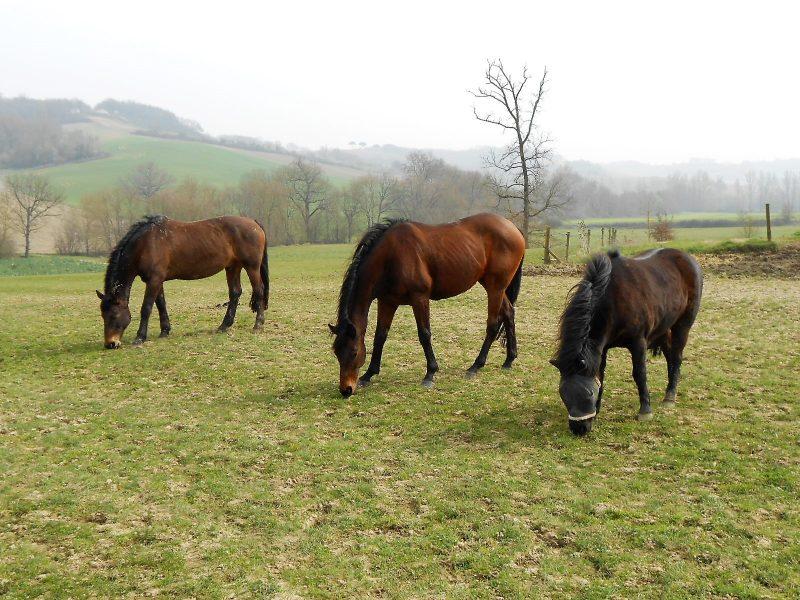 achter une maisond ans le gers pour des chevaux